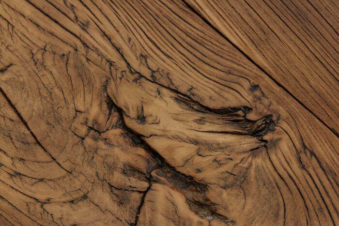 olmo legno
